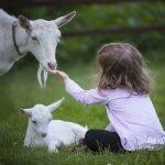 Dorf der Tiere Geit Kind